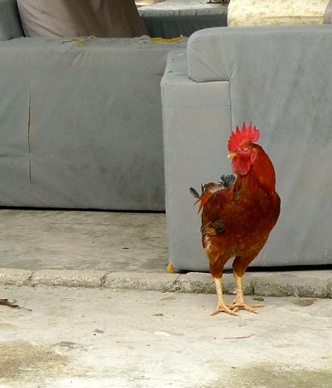 Handsome Cock….