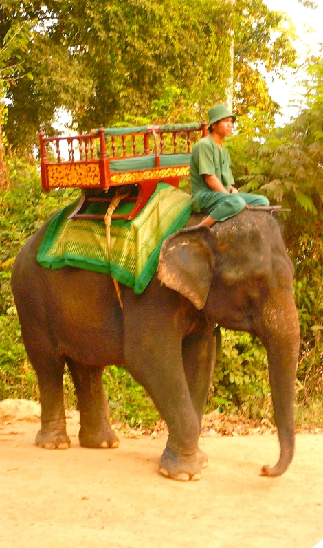 Elephant, I took this photo many years ago when I was in Cambodia.