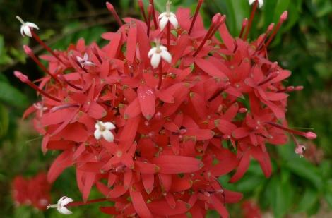 Beautiful flowers in garden….. so positive!