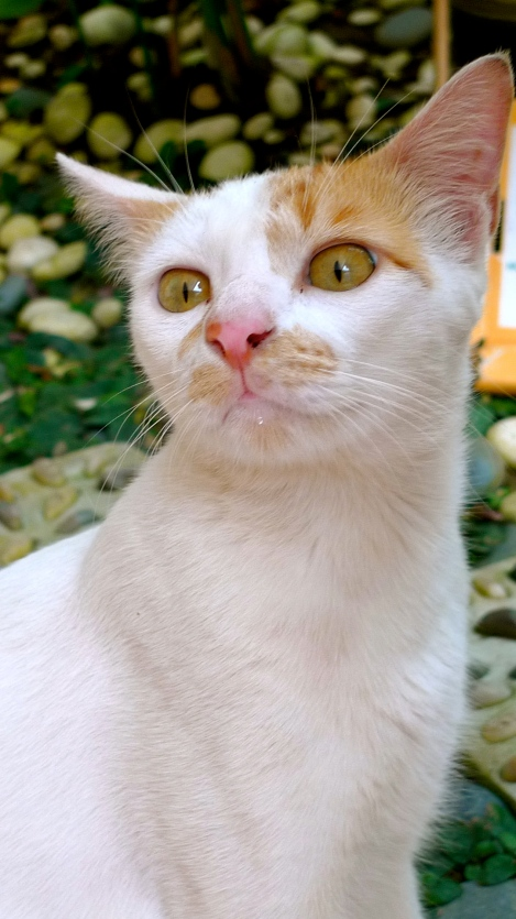 """My name is """"Little White""""…. or """"Kucing- Cat in Malay language"""" or..."""