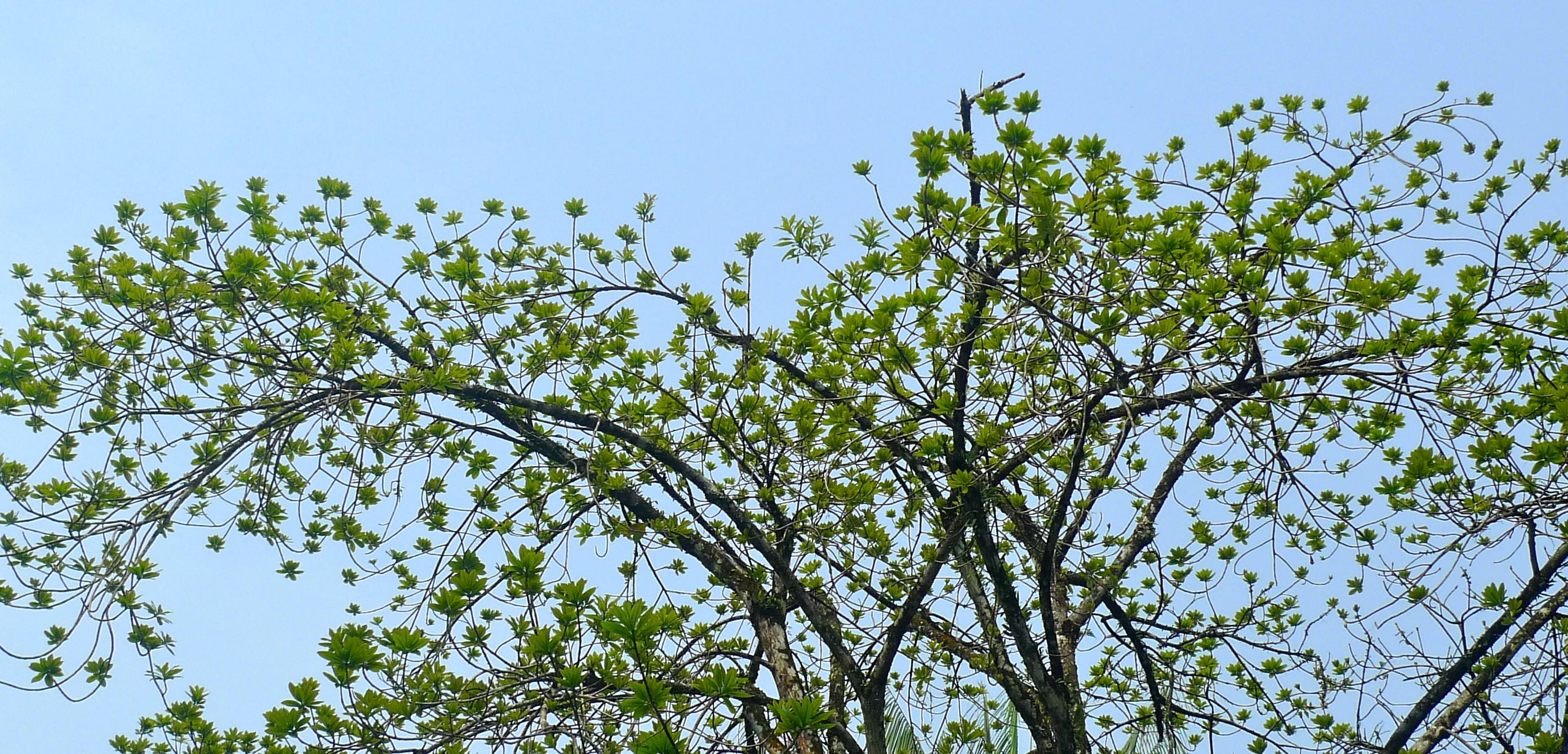 Green lotus flower lijiun a green lotus flower in the sky serenity izmirmasajfo
