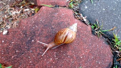 A snail is crossing the walk way… If we are only focus on talking, we might step on it. Be mindfulness when we are with nature!