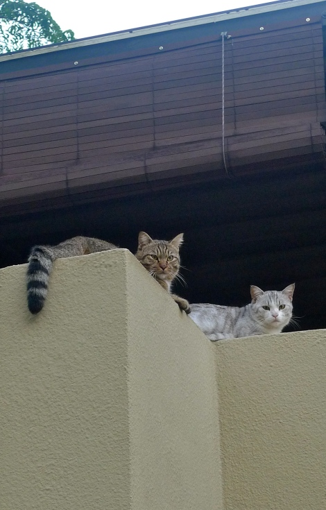 I met 2 beautiful cats during one of my morning walk… Appear once only…..
