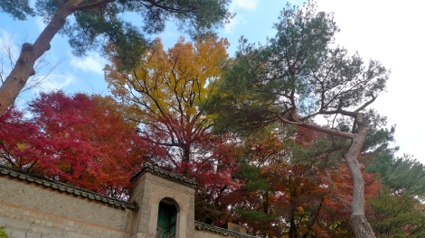 No matter what color of leaves that the tree turn to…. It's still the same tree!