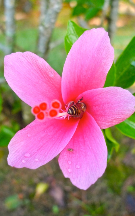 A bee was working hard to  collect nectar from flower.