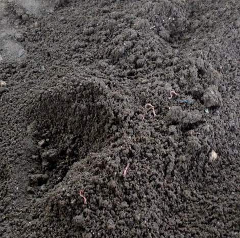 Natural compost with worm...