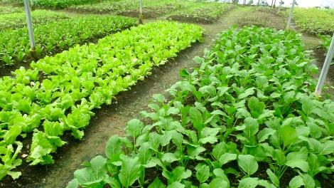 Yummy Vegetables! Original taste!