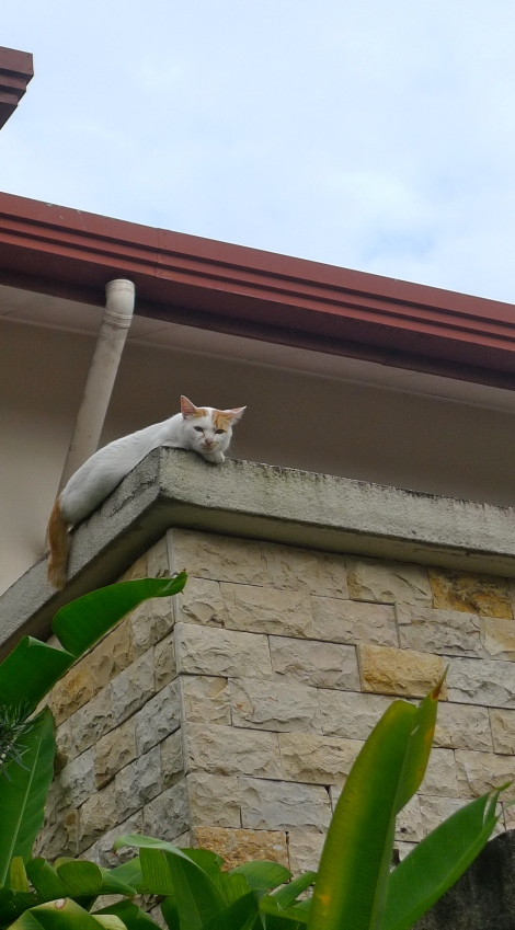 """Sometimes, Little white will stare on us from top when we are leaving home… Look at his eyes… """"LOVE"""""""