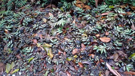 The Fallen leaves act as fertilizer, nourishes other's plant. How about us? How about our body, action and speech bringing any benefits to other beings?