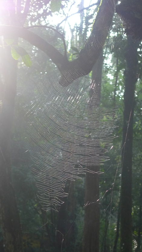 How amazing is the spider web under the sun! Get in touch with nature… our great teacher!