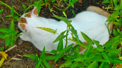 """Little White, our lovely cat does not have any """"belonging"""" in life. How about you?"""