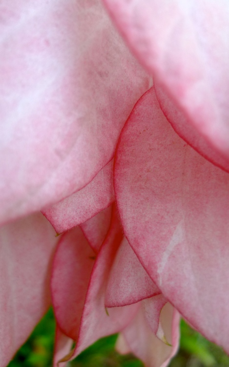 How beautiful is the petal of flowers! So sweet!