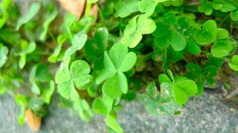 Be mindfulness! The green lovely leaves are just under your walkway…ALIVE!