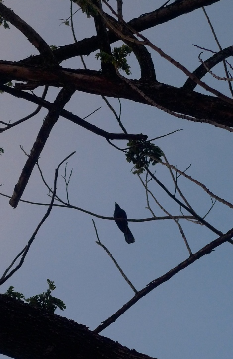 """A bird was singing a """"Good Nite"""" song. Let's start ANEW everyday!"""