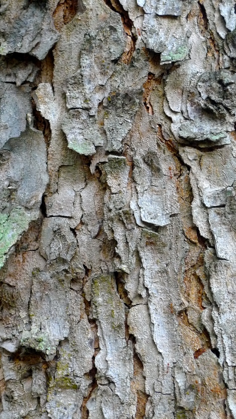 The skin of a tree, it's shown the aging… Equivalent to us, please accept that aging is a process of life, you can't stop it but you might delay it...