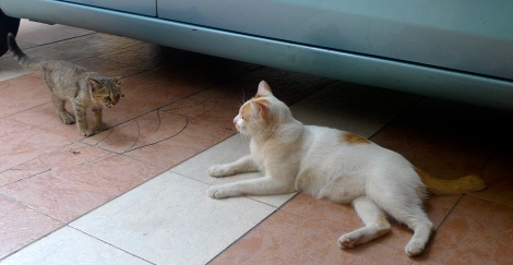 Little Kitten talked to Little white,…. Even though they are in difference color, they live in harmony.