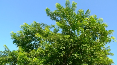 A green tree… so alive!