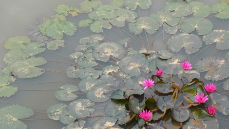 May you be at now…. Look at the beautiful lotus flower, smell the fragrance… Life is beautiful!