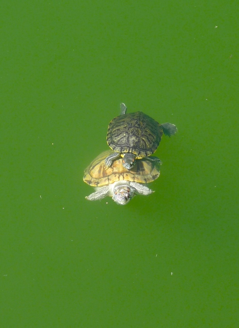 A little friend was visiting the cute turtle.. How warm!