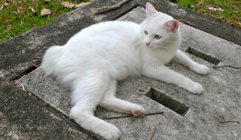 Met up a pure white cat, so pretty, so relaxing.. Learn from him, be relax and