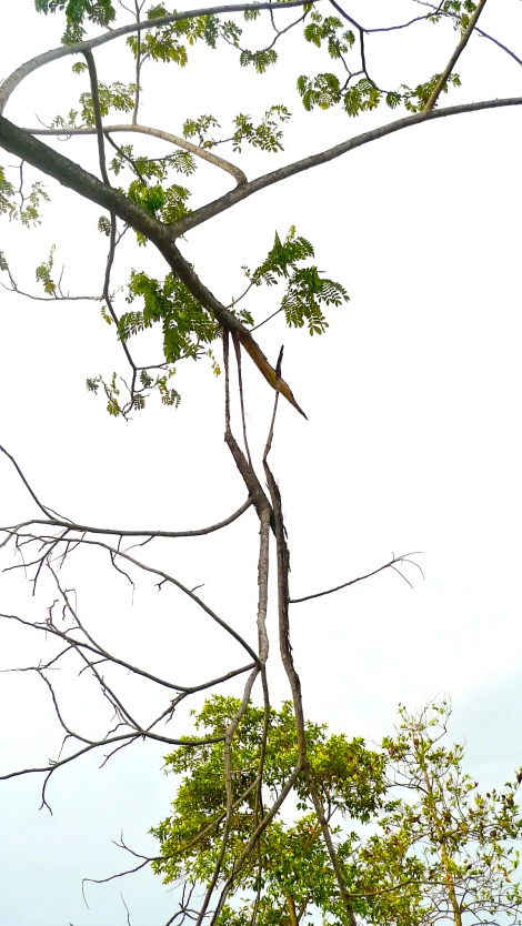 Look at the broken branches…. It's just like our bad habits, take action and transform yourself. Do not give excuses or continue procrastination...