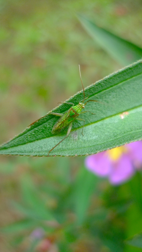 How lively is the green insect! So beautiful!