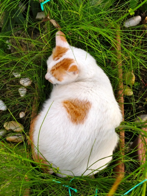 Look at our lovely Little White, he love nature too… he is enjoying his happiest moment in nature…