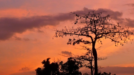 Look at the beautiful tree… Look at the beautiful sunset! Are you happy?