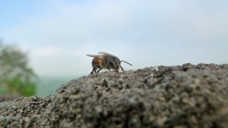 "Say ""Hi"" to a little bee in the Borobudur.. So lovely!"