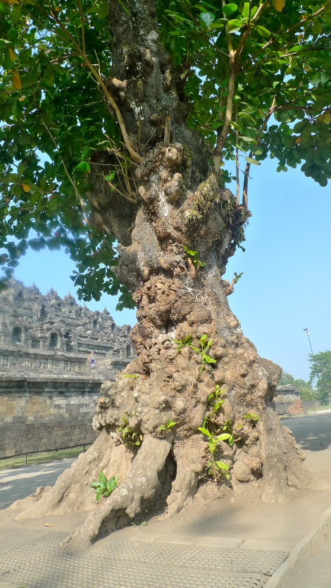 It shown the survival spirit. Look at the tree, it can overcome all challenges in life to grow bigger and stronger!