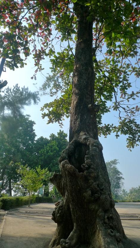 A big hole in a tree…so unique!