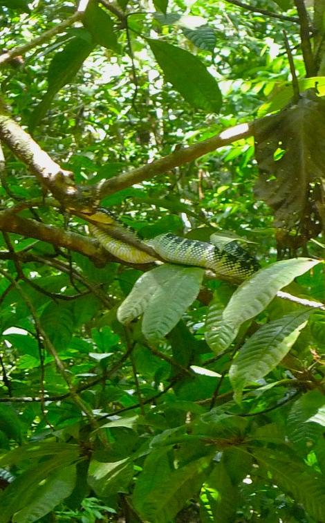 Actually, a lovely green snake was enjoying his nap on the tree.. Imagine if you are not mindful, can you see him?