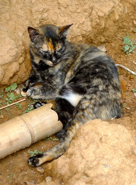 """I saw a lovely cat not doing so well when I visited the """"Orang Asli Village""""…."""