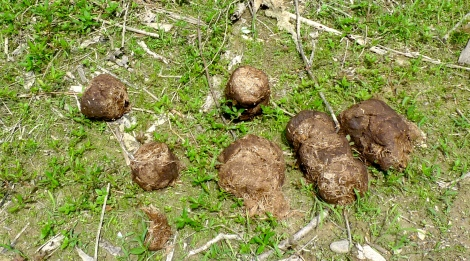 Do you love a pile of dung?
