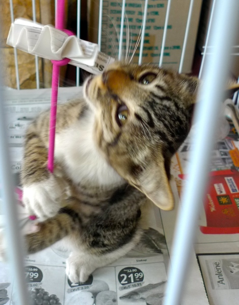 Under the Vet's advise, we put him in a cage to monitor his health condition…he is a smart boy, playing happily!