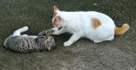 """Forget about """"I"""", """"Me"""", """"Mine""""… LIve in peace and harmony. Look at our lovely cat, they are showing a great example. Why not as a human, we are more intelligent, start from ourself, to reduce conflict"""