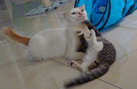 Little White is playing with Little Black happily with his toy…