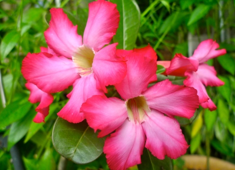 May you be blossom like the flower! Bring benefits and happiness to people surrounding!
