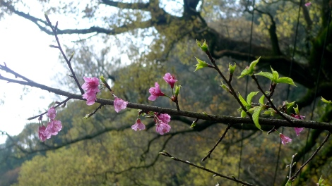 """As a """"friend of winter,"""" the plum blossom most vividly represents the value of endurance, as life ultimately overcomes through the vicissitude of time."""