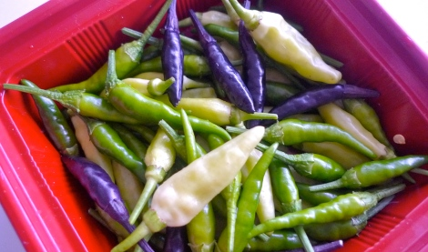We are truly happy when we see the lovely chilies. So beautiful!