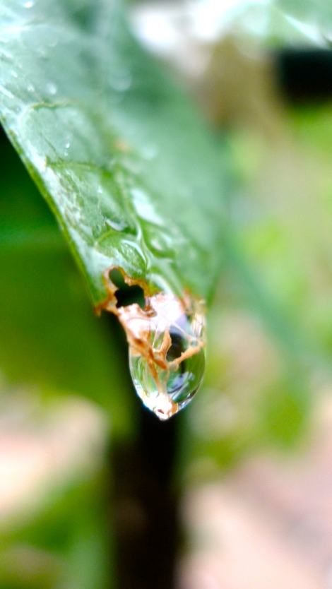 In this moment of life, its a drop of water, where is the water in next moment of life? Everything is impermanent!