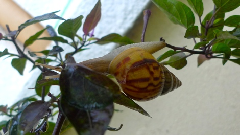 When I took this photo in garden, I am touched by the little snail. He was showing his strong spirit in overcome challenges.