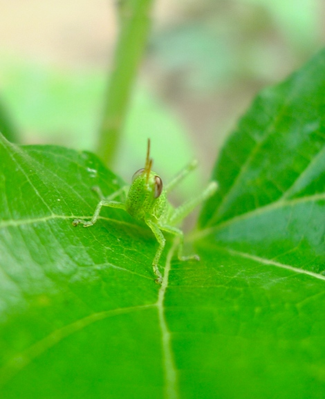How adorable is the little grasshopper!