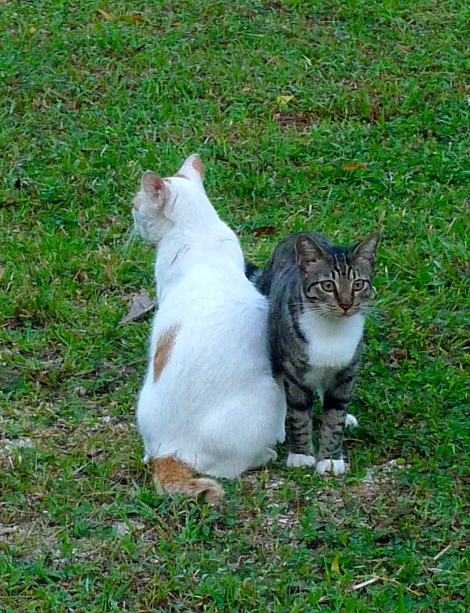Our lovely LW & LB know how to look for herb in the garden when they are not feeling well..