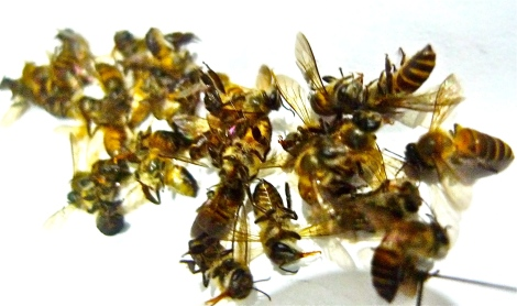 Many worker bees lost their life in building the hives…