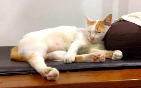 Take time to relax yourself, Look at Little White, how comfortable and relaxing he is!