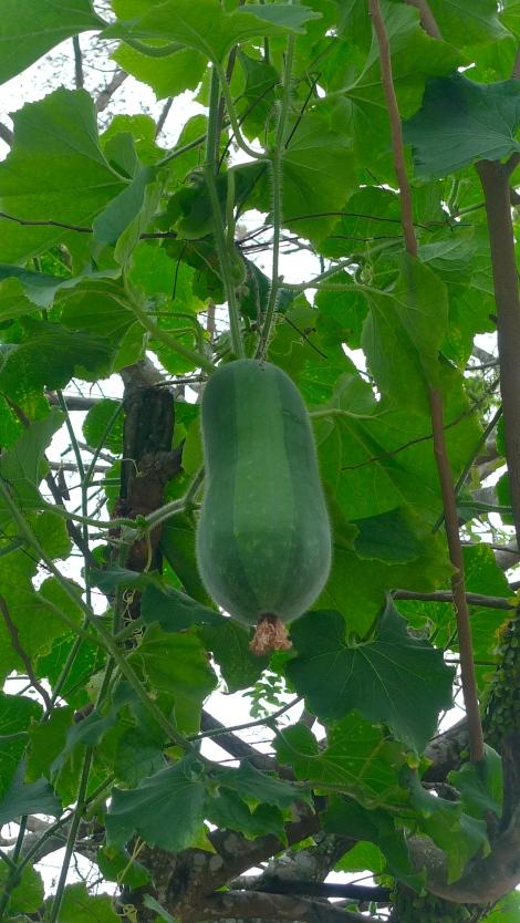 It's not easy to reap fruit, big challenge to grow big too…