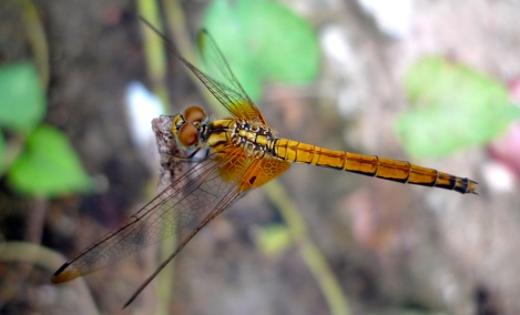 Lovely dragonfly friend...