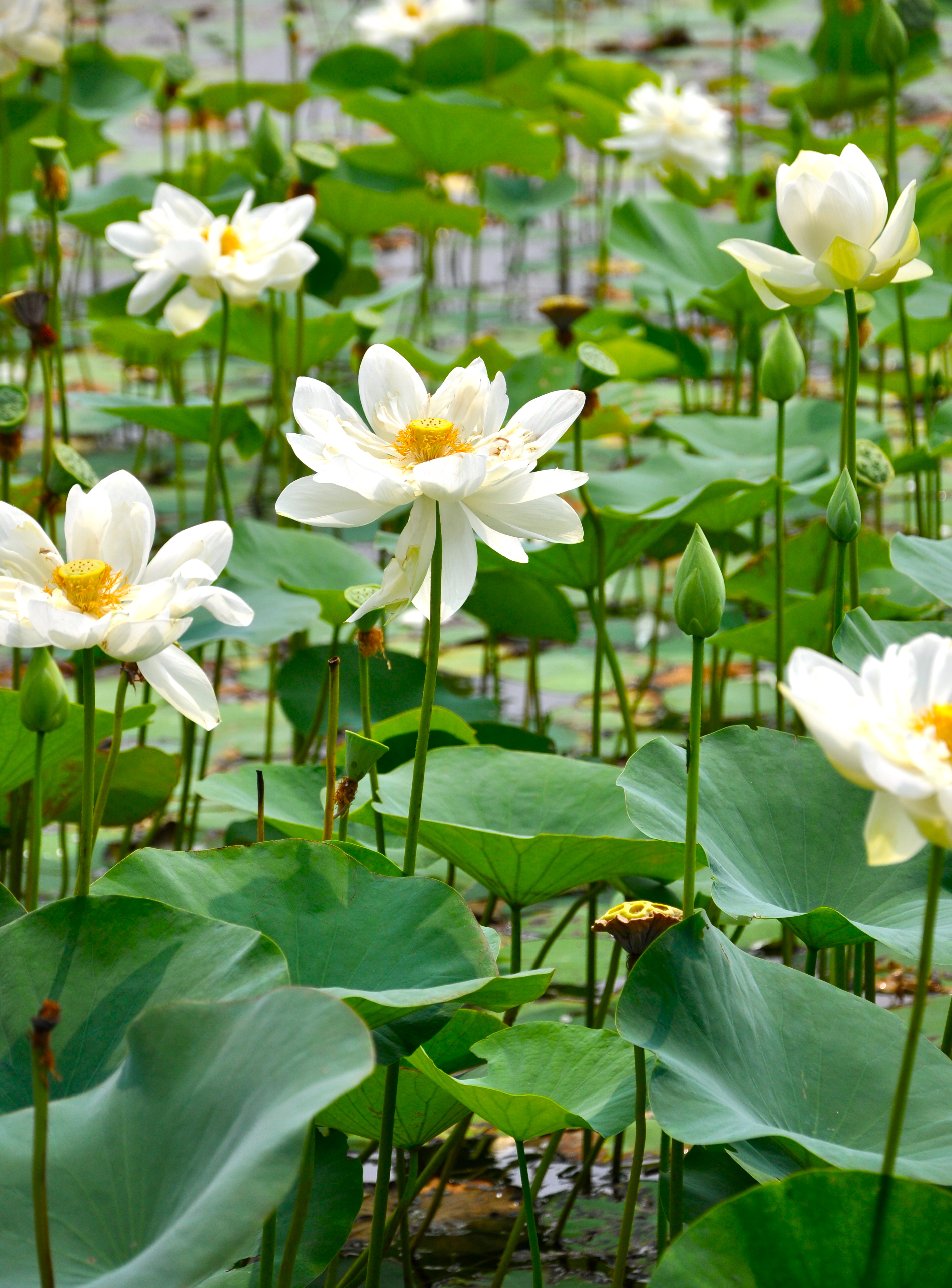 Keep doing right things lijiun be like the lotus flower no matter how challenging is the environment it spread izmirmasajfo
