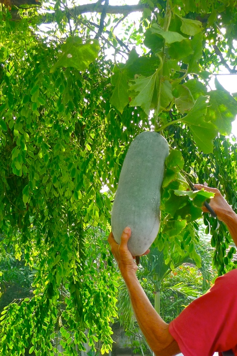 The hairy melon will ripe when conditions are right. We are able to enjoy it. Similar to the advices you are giving to others, when conditions are right, they are going to be awaken.
